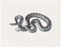 snake; vipera ammodytes by denise weber