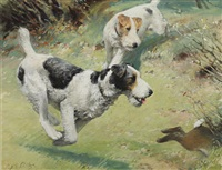 fox terriers chasing a rabbit (+ the red spotted handkerchief; 2 works) by septimus e. scott