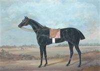 portrait du cheval jerry by roger de scitivaux