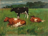cows on a meadow by thomas herbst