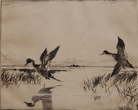 pair of pintails by frank benson