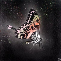 butterfly by nick walker