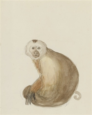 the white headed capuchin monkey another pair study by jean baptiste audebert