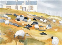 grazing sheep at the neighbours house, corraen penninsula by wendy wacko