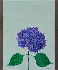 hydrangeas by rinjiro hasegawa