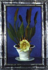 flowering cactus by gluck (hannah gluckstein)
