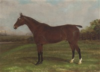 a chestnut hunter in a paddock by alfred moginie bryant