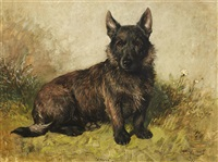 spider, portrait of a scottish terrier by john emms