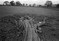 felled tree, hartshill moor by paul hill