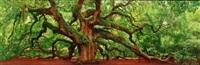 tree of hope (charleston, south carolina) by peter lik