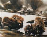 musk oxen by wolfgang weber