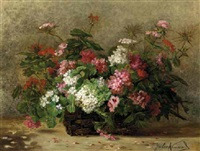 geraniums and pelargonium in a basket by julie weber