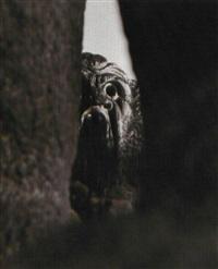 mostro del parco di bomarzo by fosco maraini