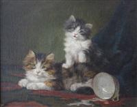 chatons à l'écuelle by daniel merlin