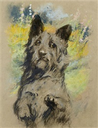 scottish terrier by arthur wardle