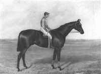 bendigo, a dark bay racehorse by sydney r. wombill