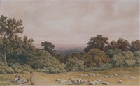 sheep grazing in an extensive landscape by robert hills