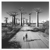 allée des baobabs, madagascar by chris simpson