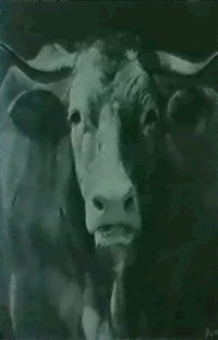 a study of an ox by adolphe vogt