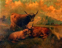 highland cattle by g. wilson
