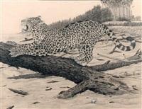 jaguar s'étirant by claude rabanit