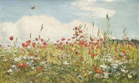 a poppy field by walter field