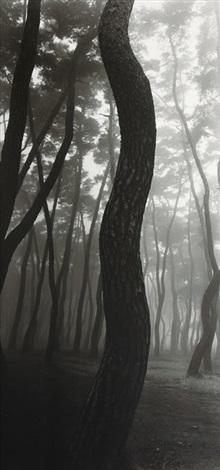 pine tree by bae bien u