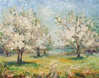 apple trees in bloom by francesco j. spicuzza