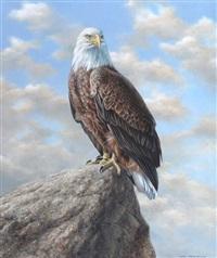 águila calva by axel amuchastegui