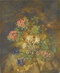 edelweiss et autres fleurs de montagne by theodor petter