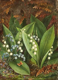 lily of the valley by albert durer lucas