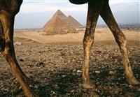 świat to jest dziwne miejsce, egipt by tomasz tomaszewski