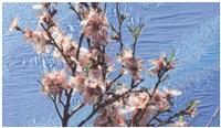 spring branches by ramazan bayrakoglu
