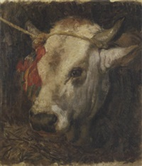 testa di bovino by umberto coromaldi