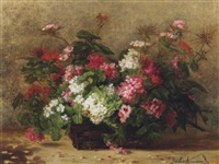 geraniums and pelagonium in a basket by julie weber
