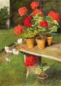 geraniums by irena weissowa aneri