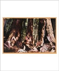 The big trees, 1999