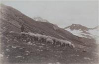 pâturage dans les alpes, haute-valteline, lombardie, italie by vittorio sella