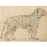 étude d'un tigre du bengale by camille auguste gastine