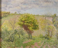 vineyard, france by mary duncan
