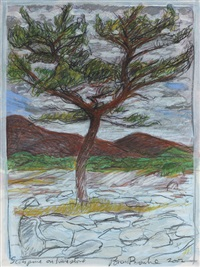scots pine on limestone by brian bourke