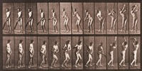 animal locomotion, pl. 291 by eadweard muybridge