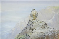 peregrine falcon; sparrowhawk and chaffinch (set of 2) by george edward lodge