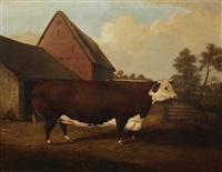 dun and white short horned bull in a farmyard by h.j. quintin