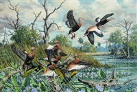 ballet - black-bellied whistling ducks by harry curieux adamson