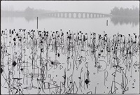 wilted lotus blossoms, former summer palace, kunming lake, beijing, china by rené burri