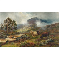 highland cattle in the mist of the highlands by douglas cameron