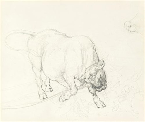 étude dun boeuf tête baissée study by théodore géricault