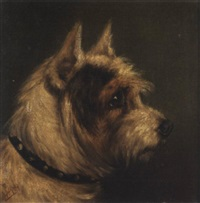 head of a terrier by edward aistrop