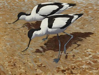 avocets working the shallows, havergate island by keith shackleton